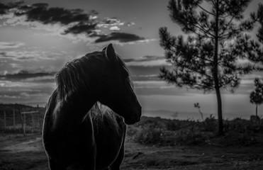 Silhueta de cavalo ao pôr do sol nas montanhas a preto e branco