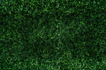 Aluminium Prints Grass abstract green leaf texture, nature background, tropical leaf