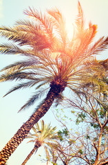 Palm trees against blue sky, Palm trees at tropical coast, vintage toned and stylized, coconut tree, summer tree, vacation travel concept