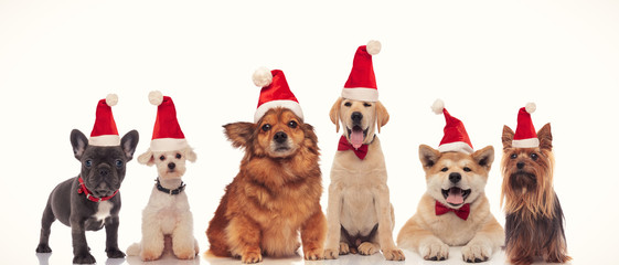 group of adorable santa dogs in a row