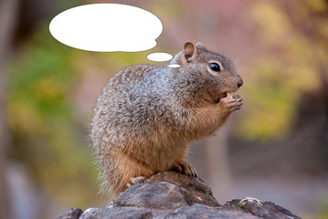 Funny picture with bubble idea squirrel eating nuts.