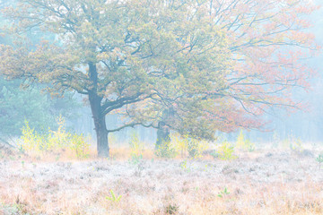 frosty meadow and yellow beech trees in autumn
