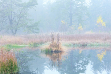 quiet foggy autumn morning on forest lake