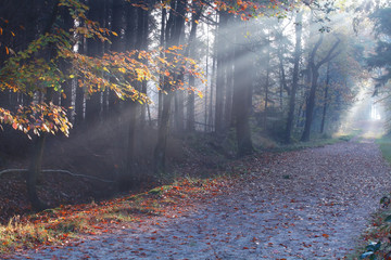 sunbeams in misty autumn forest