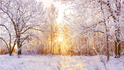 Photo sur Aluminium Campagne snowy winter landscape panorama