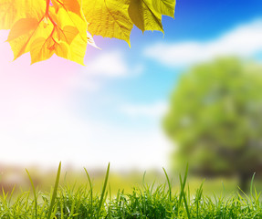 Fototapeten Gelb Green leaves with grass and blurred background with park against sky with sunlight