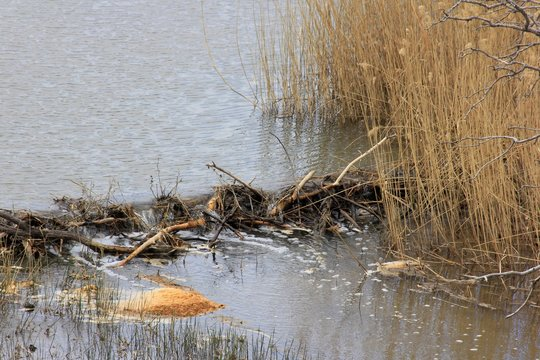 A Beaver Dam in Kansas with flowing water and brown grass on a Creek.