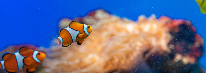 picture of the aquarium. Colorful fish