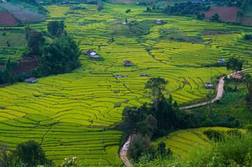 Photo sur Aluminium Vert beautiful landscape view of rice terraces