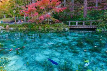 モネの池 岐阜県 日本