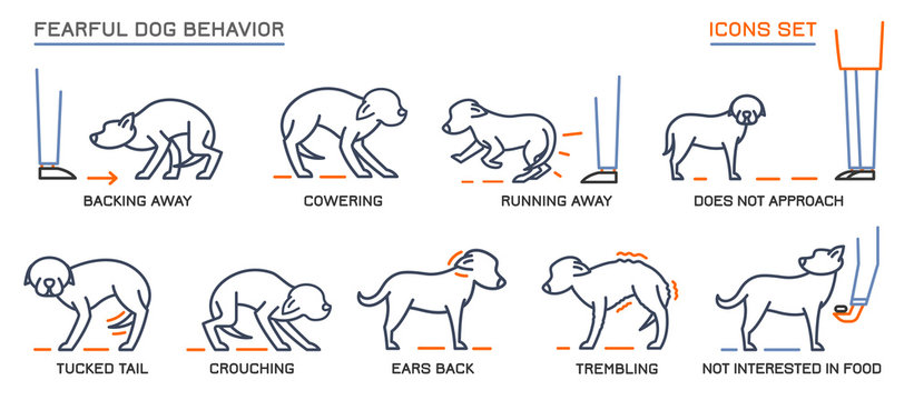 Dog Behavior Icons Set