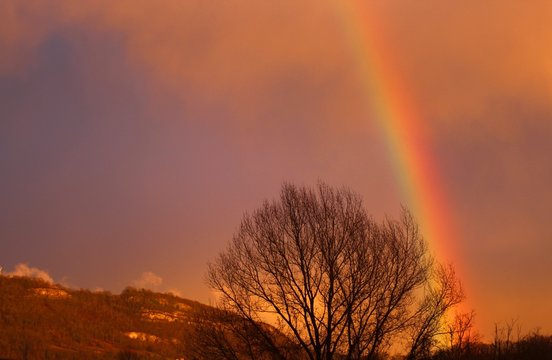 Beautiful shot of bare trees under the breathtaking sky with a rainbow