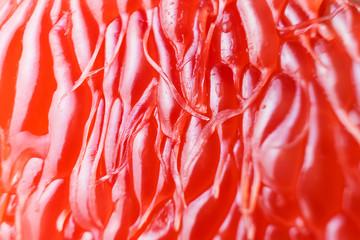 Foto auf Leinwand Makrofotografie Bright juicy grapefruit pulp close-up. High-quality image is suitable for topics: healthy lifestyle, vitamins, proper nutrition, diet, summer, fresh juices. Background fruit texture.