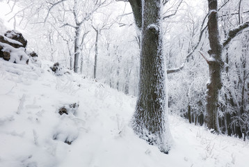 Winter in frost forest with tree and snow