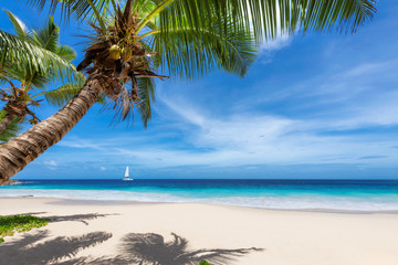 Fototapete - Sunny beach with palm trees and a sailing boat in the blue ocean on Paradise island.