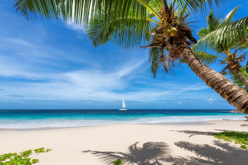 Fototapete - Sandy beach with palm trees and a sailing boat in the blue sea on Paradise island. Fashion travel and tropical beach concept.