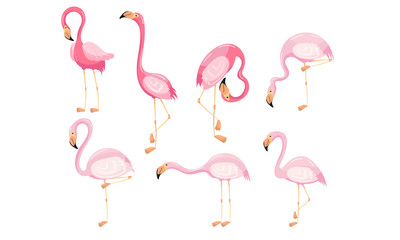 Canvas Prints Flamingo Beautiful Flamingo Vector Set Isolated On White Background