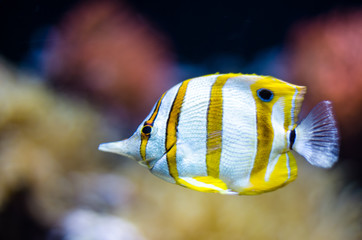 Underwater world in deep water in coral reef and plants nature flora in blue world marine wildlife, travel nature beauty exploration in diving trip, recreation ocean sea dive. Fish, corals,creatures