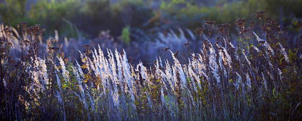 Panorama von bunten Wiesengräsern im Morgenlicht