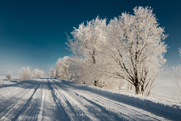 Foto op Plexiglas Donkergrijs Road along the snowy trees against the blue sky. Winter landscape