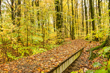 Narrow bridge across a ditch in a forest, continuing as a footpath meandering through trees with mainly yellow foliage on a rainy day in autumn
