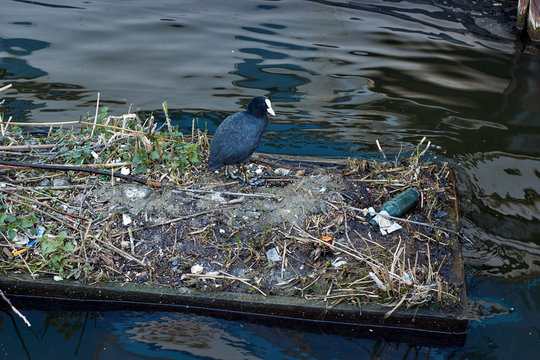 Plastic pollution in our oceans and river could cause a wildlife extinction event