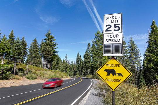 """A """"wildlife crossing"""" and 25MPH speed limit sign by a road with a passing car in Yosemite  National Park, California."""