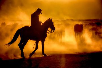 Wild horses living in nature