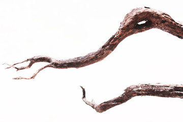 Dry tree branch isolated on white background