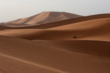 Poster de jardin Desert de sable The beauty of the sand dunes in the Sahara Desert in Morocco. The Sahara Desert is the largest hot desert and one of the harshest environments in the world.