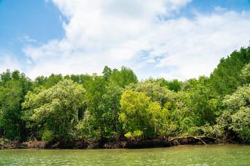 Photo sur Aluminium Pistache Tropical mangrove forest with river to the sea shore