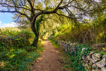 Foto op Aluminium Weg in bos Árbol en camino del bosque frondoso
