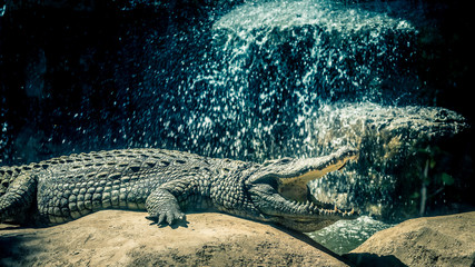 Foto auf Leinwand Crocodile crocodile cascade