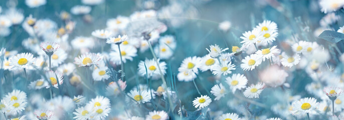 Papiers peints Marguerites Selective and soft focus on daisy flower, beautiful nature in spring
