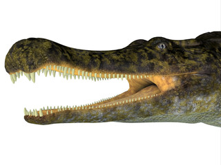 Sarcosuchus Reptile Head - Sarcosuchus was a carnivorous aquatic crocodile that lived in Africa during the Cretaceous Period.