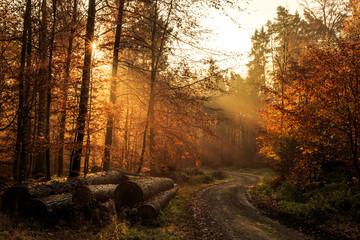 Waldweg im Herbst mit Strahlen der Morgensonne