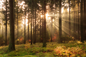 Sonnenstrahlen der Herbstsonne im morgendlichen Süntel