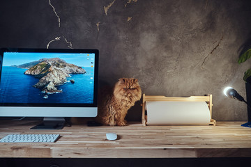 Adorable fluffy persian cat is sitting on the table near computer.