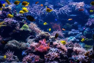 underwater coral reef landscape with colorful fish and marine life