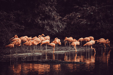 Fototapeten Flamingo flamingo standing in water with reflection
