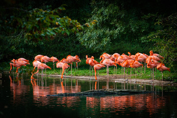 Tuinposter Flamingo flamingo standing in water with reflection