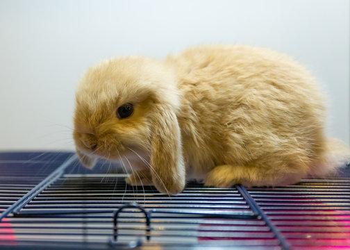 a little rabbit