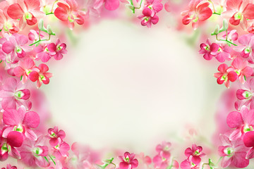 beautiful pink and red orchid flower frame background