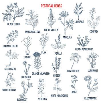 Set of pectoral herbs