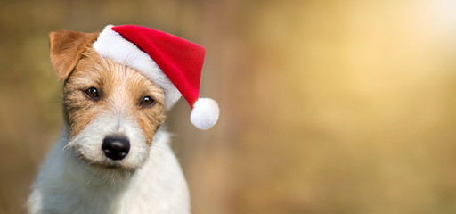 Santa cute happy pet dog puppy smiling, christmas card background or web banner with copy space