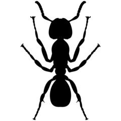 Schattenbild einer Ameise, isoliert freigestellt vor weißem Hintergrund