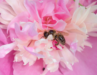 Honigblüte