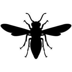 Schattenbild einer Wespe, isoliert freigestellt vor weißem Hintergrund
