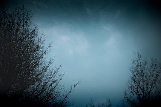 夜・鬱・ホラー・不安イメージ素材:夜の闇に包まれた暗い森と不気味な光を放つ夜空
