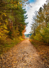 Street with fallen leaves along trees in autumn forest landscape